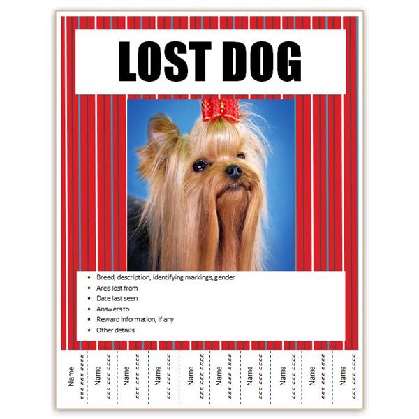 Making Posters Flyers To Find Your Lost Pet – Lost Dog Flyer Template Word