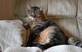 Benefits Of Adopting Older Cats