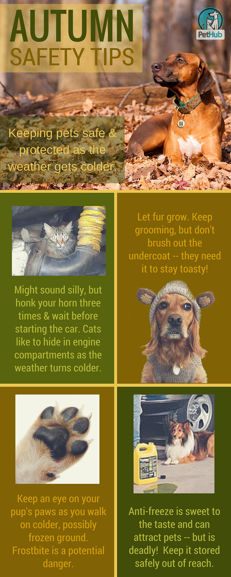 4 Critical Pet Safety Things To Remember As Summer Turns Autumn