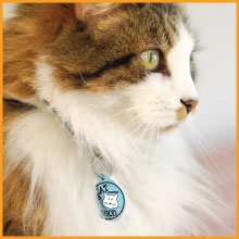 PetHub Cat ID tags