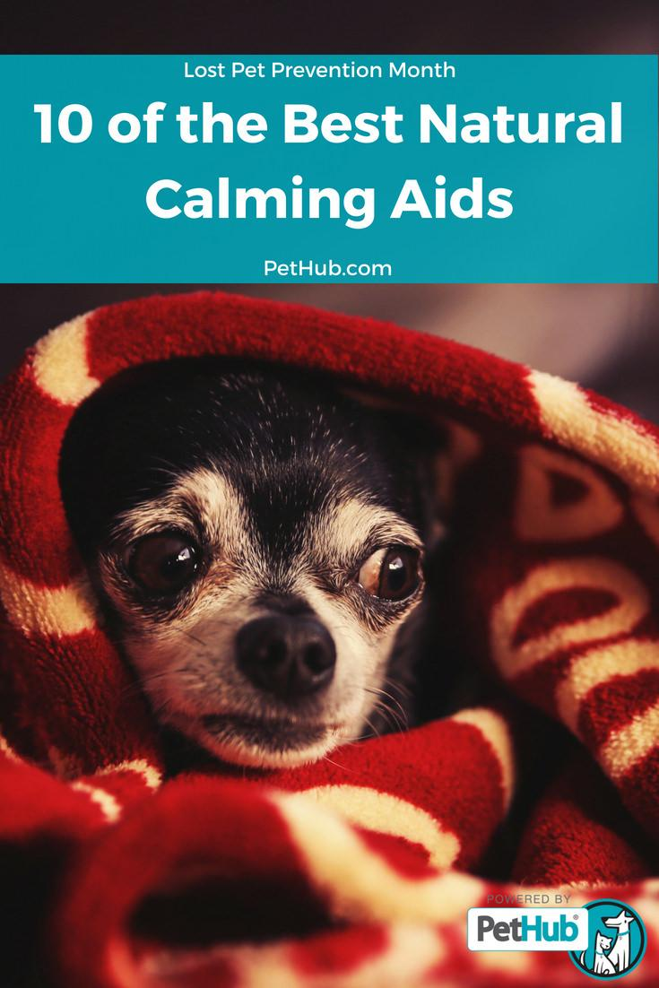 10 Best Calming Aids for Pets | PetHub