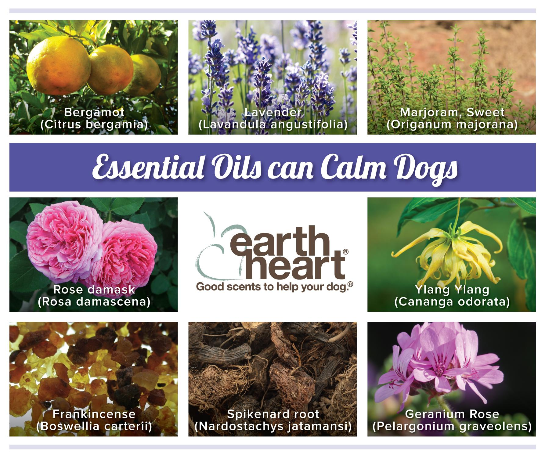 Does Aromatherapy Really Calm Dogs Pethub