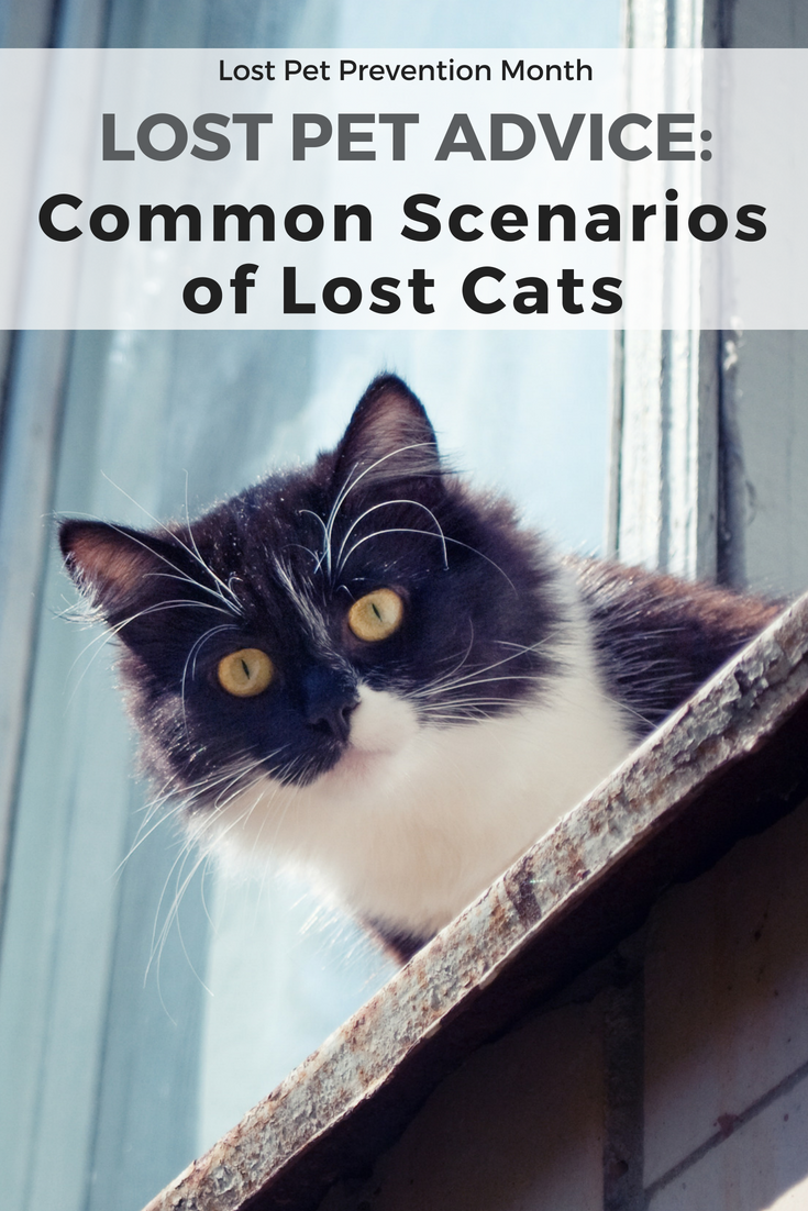 Lost Pet Advice: Common Scenarios of Lost Cats | PetHub