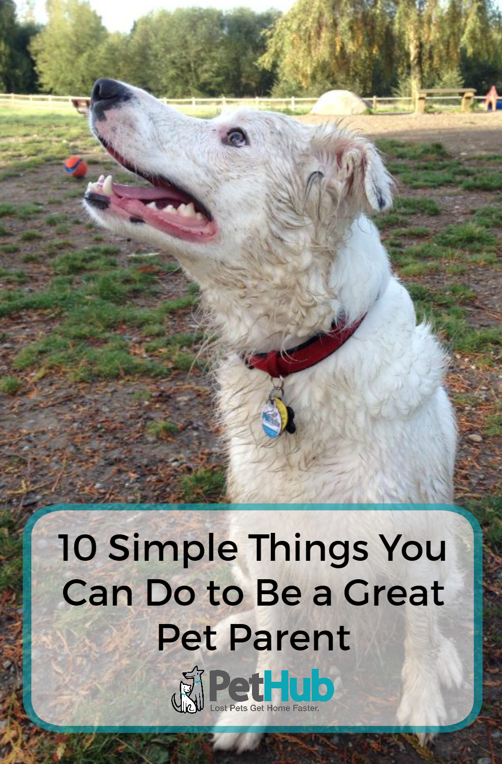 Simple Things You Can Do to Be a Great Pet Parent