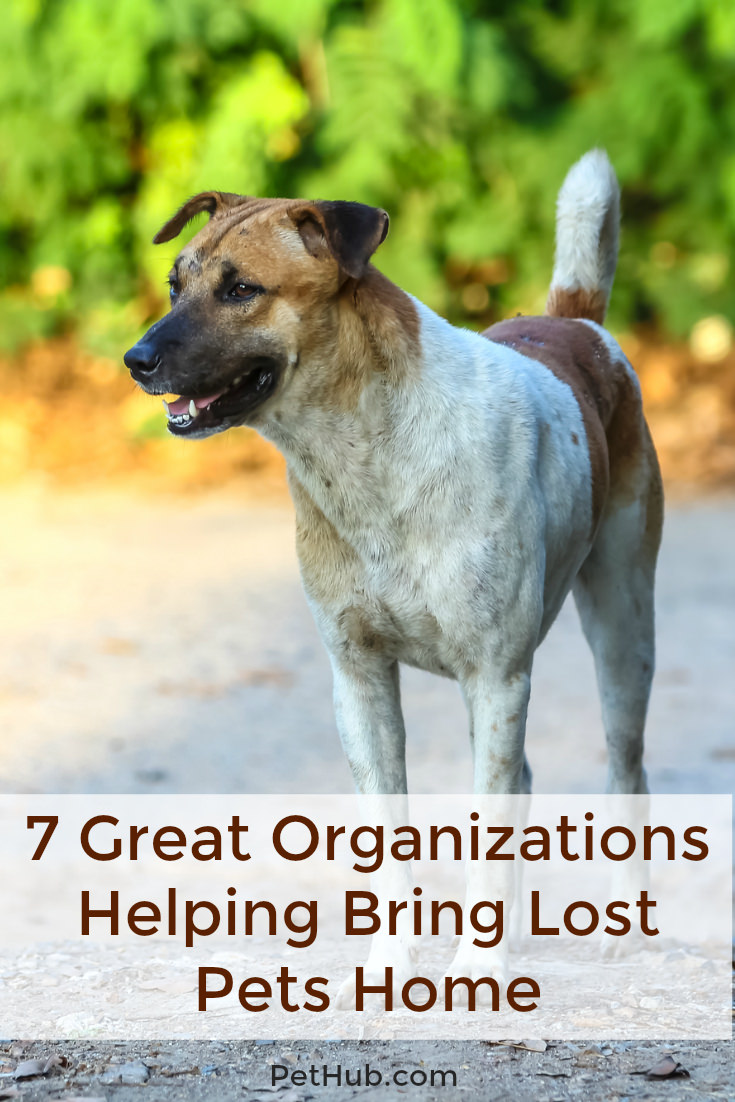 7 Great Organizations Helping Bring Lost Pets Home Pethub