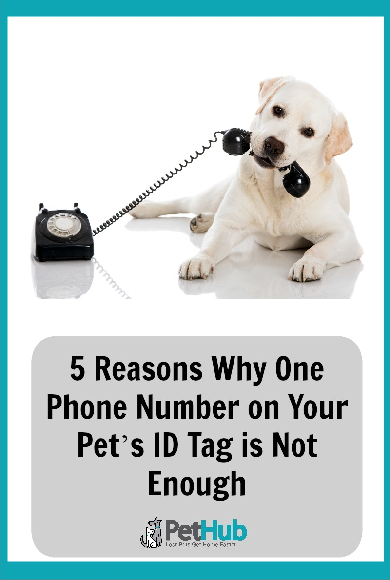 Put Multiple Phone Numbers on Your Pet's ID