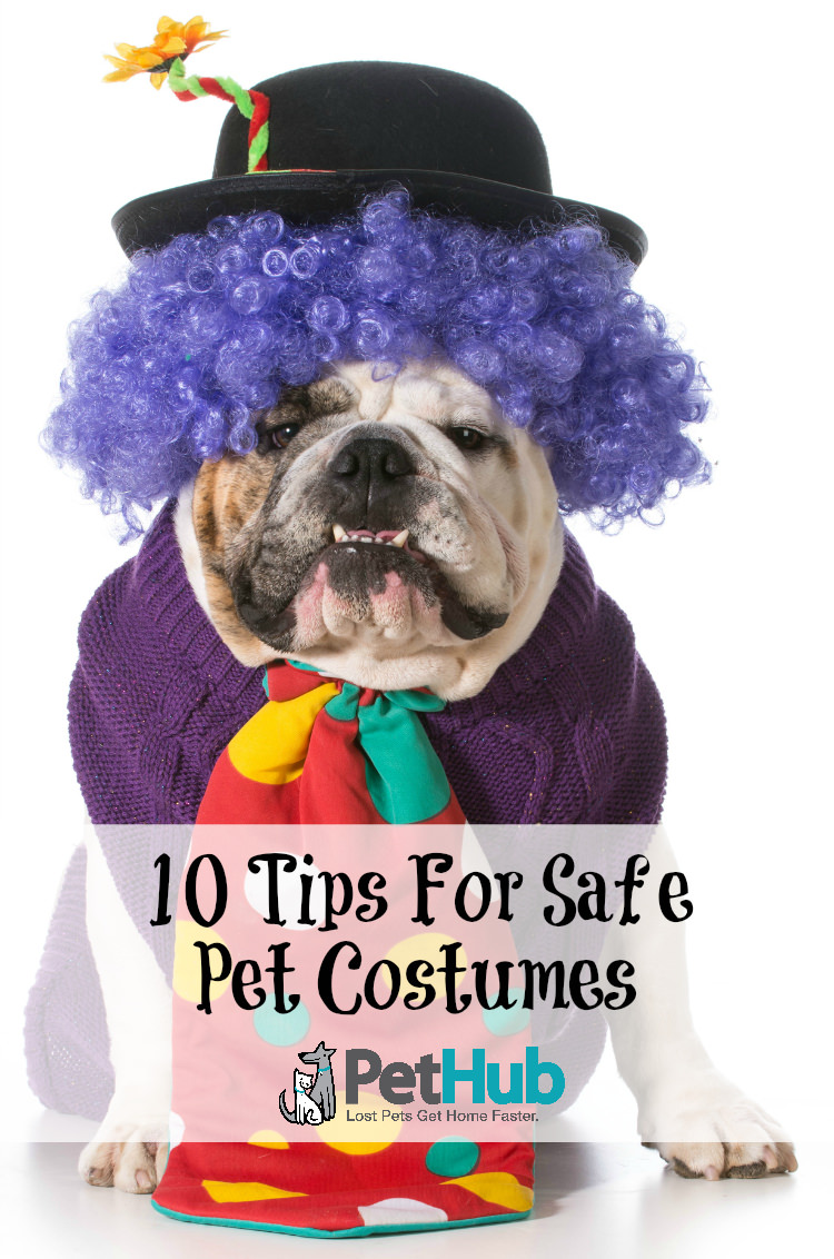 dog clown with title 10 tips for safe pet costumes