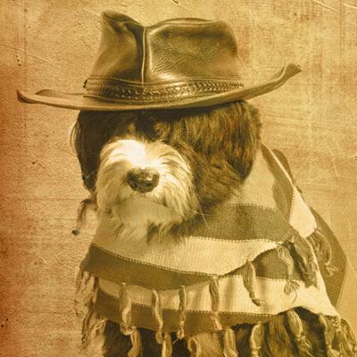 long haired cowboy dog