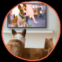 DogTV Gift Subscription