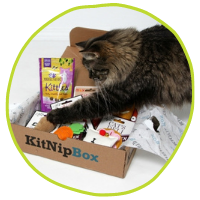 KitNipBox for Cats
