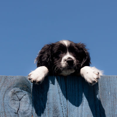 dog peeking over fence